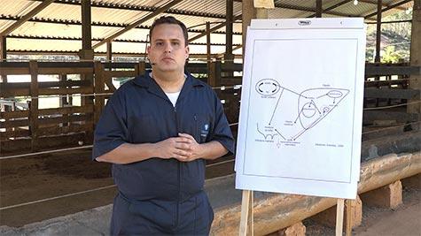 Doenças Metabólicas em Vacas Leiteiras: Cetose e Esteatose Hepática