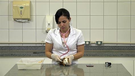 Anamnese e Exame Clínico em Lagomorfos e Pequenos Roedores Herbívoros
