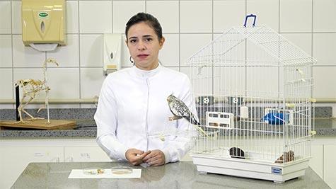 Abordagem Clínica de Aves
