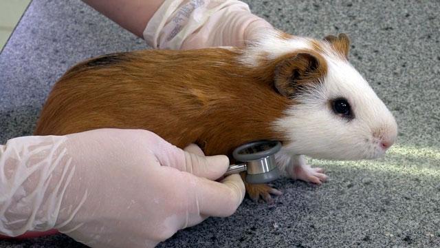 Clínica e Manejo de Animais Silvestres e Pets Exóticos