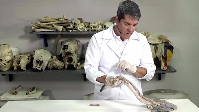 Anatomia Veterinária - Anatomia Sistemática dos Animais Domésticos