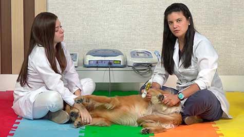 Reabilitação Ortopédica II