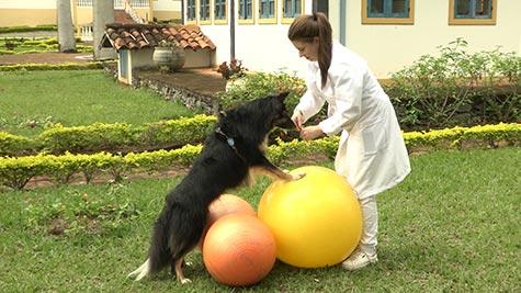 Reabilitação de Cães Atletas