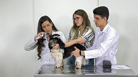 Otite Externa Fúngica/Bacteriana em Cão