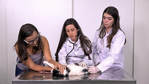 Dermatofitose em Gato
