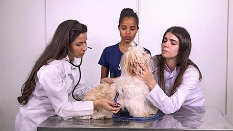 Cystoisospora em Cão