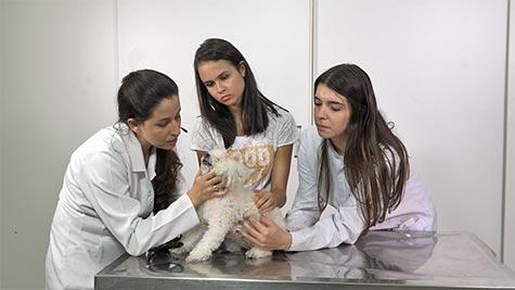 Hiperadrenocorticismo em Cão