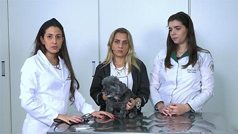 Degeneração Mixomatosa Valvar Mitral e Tricúspide em Cão