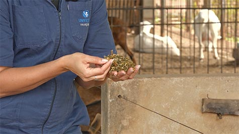 Nutrição e Alimentação de Caprinos
