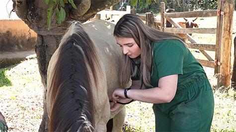 Mieloencefalite Protozoária em Cavalo