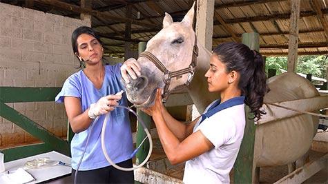 Afecções Virais e Recorrentes do Sistema Respiratório dos Equinos