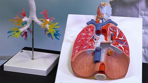 Cavidade Torácica: Padrões Pulmonares