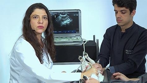Exame Ultrassonográfico