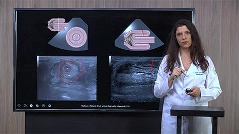 Imaginologia do Trato Digestório