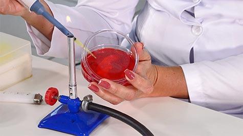 Gêneros Staphylococcus e Streptococcus