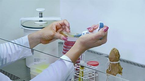 Gêneros Clostridium e Bacillus