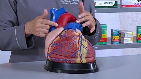 Drogas que Atuam no Sistema Cardiovascular