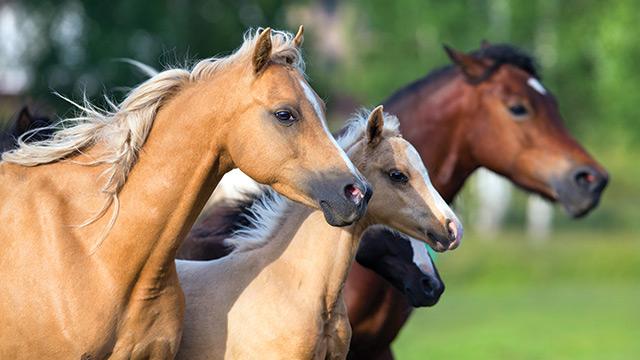 Cursos na área Criação de Cavalos
