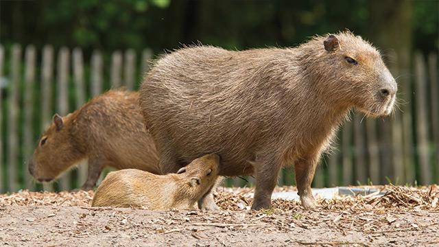 Cursos na área Animais Silvestres
